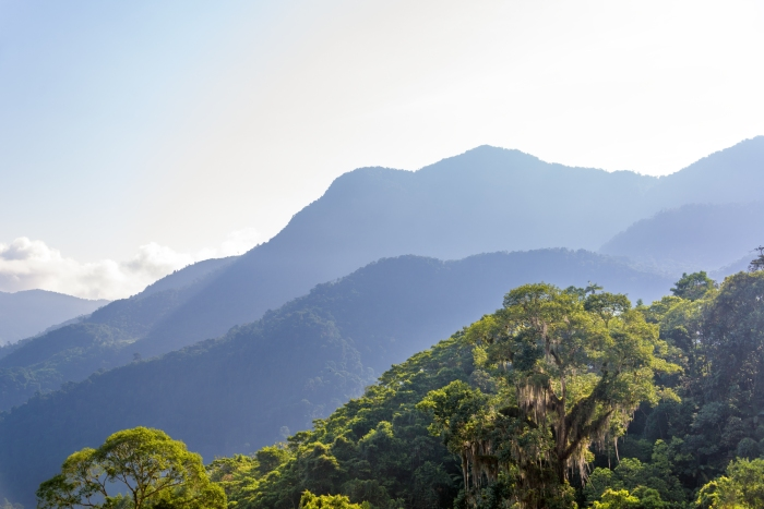 View of a jungle with hills in the background in the Sierra Nevada de Santa Marta in Colombia