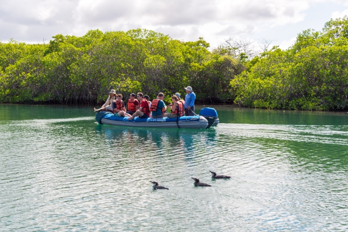 galapagos_isabela_penguins_and_dingy1